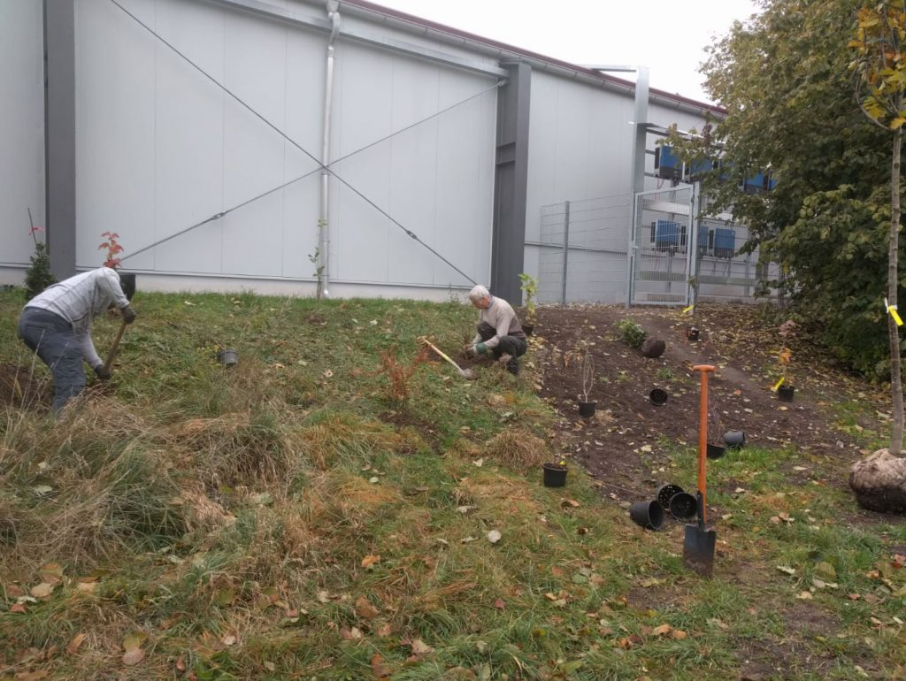 Baumpflanzung am Tennisclub bei Weilheim