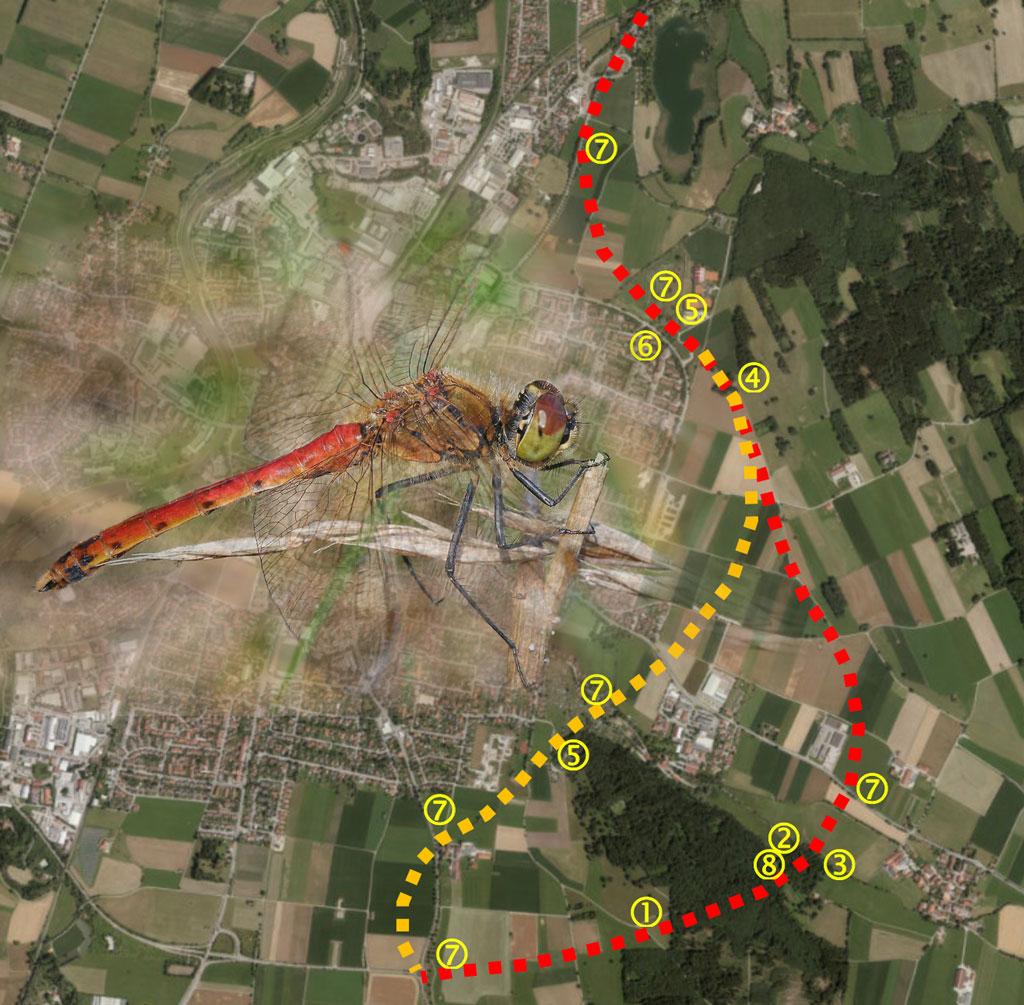 Grafik aus Stellungnahme von BN, LBV, AK Natur zu Folgen einer Ostumfahrung Weilheim – Hotspots entlang der Trassen mit Libelle