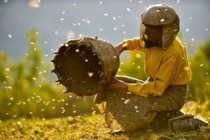 Dokumentarfilm 'Land des Honigs', Bild 1 (Imkerin mit Bienenkorb)