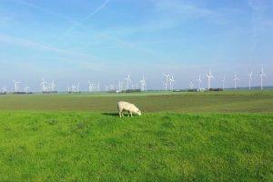 Dokumentarfilm 'Hinterm Deich wird alles gut' - Bild (Schaf vor Windkrafträdern)