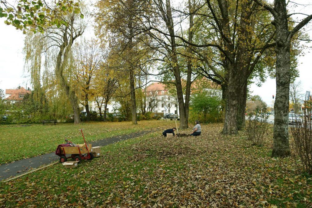 Maibaumpark Weilheim, Pflanzung von Blumenzwiebeln Nov 2020. Foto: M.Wessel