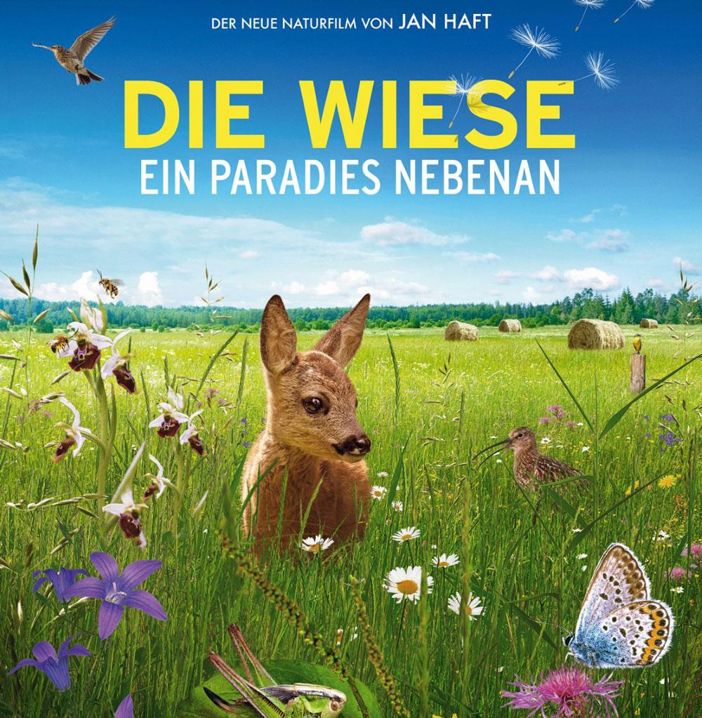 "Dokumentarfilm ""Die Wiese"" - Titelbild: Kitz in Wiese"